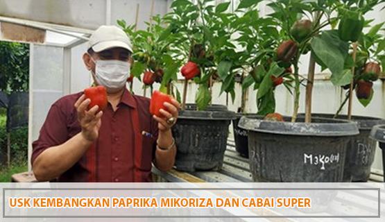 USK Kembangkan Paprika Mikoriza dan Cabai Super